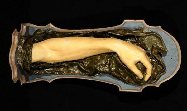 Anna Morandi Manzolini Anatomical Waxes
